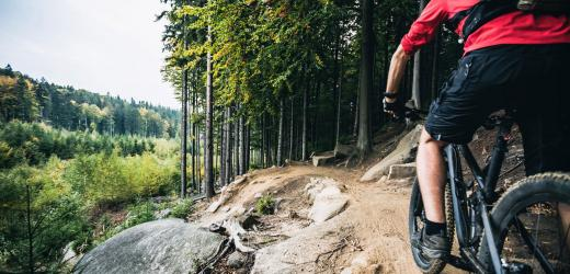 Man riding his mountain bike in the forest with tall trees